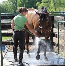 Best Horse Shedding Blade by Horse Grooming Challenges
