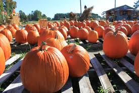 Canon City Pumpkin Patch by Notes From A Mom In Chapel Hill A Guide October 2011