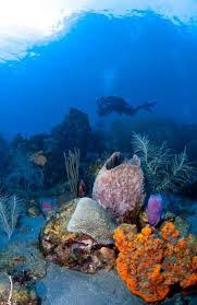 Decorator Crab Tank Mates by 25 Exotic Scuba Diving Destinations Sport Diver