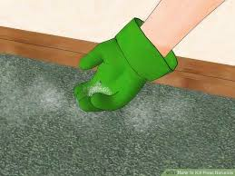 Fleas Hardwood Floors Borax by How To Kill Fleas Naturally With Pictures Wikihow