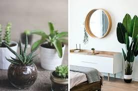 welche pflanzen dürfen ins schlafzimmer superba