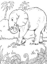 Rainforest Scene Coloring Pages