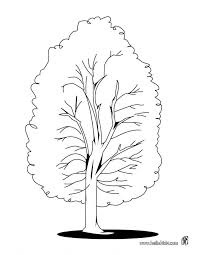 Tree Coloring Pages Printable Poplar Page Nature Of A Branches Plants