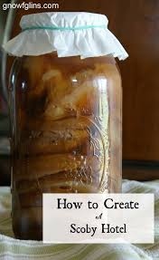 Christmas Tree Preservative Recipe Mythbusters by 783 Best Beerology Images On Pinterest Beer Craft Beer And Beer