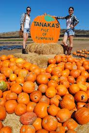 Tanaka Pumpkin Patch Irvine by Pumpkin Patch L And A In L A