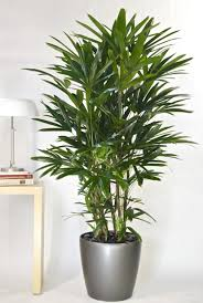Best Plant For Your Bathroom by Best 25 Palm House Plants Ideas On Pinterest Indoor Green