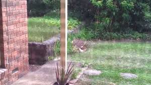 A Wild Life Kangaroo Found Jumping Around My Backyard . - YouTube My Backyard Garden Nation Of Islam Ministry Agriculture Super Groovy Delicious Bite Big Lizard In My Back Yard Erosion Under Soil Backyard Ask An Expert I Think Found Magic Mushrooms Wot Do This Video Is Hella Clickbait Youtube Dinosaur Storyboard By 100142802 Holes In The Best Home Design Ideas Cottage Months Ive Been Creating More Garden Rooms Cat Frances Aggarwal Backyards Terrific Rocks And Minerals Tree Growing Started Fruiting Can Someone Id
