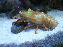 Decorator Crab Tank Mates by Carson U0027s Barrier Reef 400 All In One Tanks Nano Reef Com Community