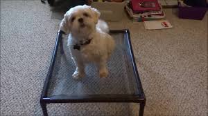 Kuranda Dog Beds by How To Make A Pvc Dog Bed For Camping Part 2 Youtube