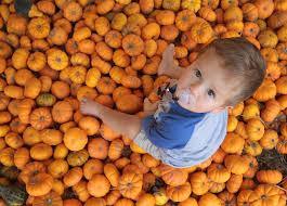 Sarasota Pumpkin Festival by 25 Reasons Not To Miss The 25th Hunsader Pumpkin Fest News