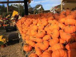 Pumpkin Picking Richmond by Where To Go Pumpkin Picking Near Nyc With Kids