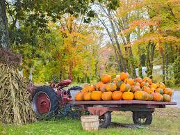 Books About Pumpkins Preschool by Pumpkins Scholastic