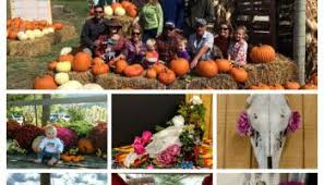 Colorado Springs Pumpkin Patch 2017 by Pumpkin Patch Is Going Off New Castle Gardens Organic