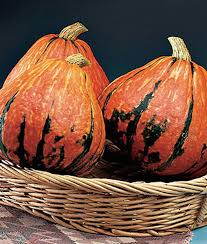Types Of Pumpkins For Baking by Winter Squash Varieties Types Of Winter Squash Heirloom Squash