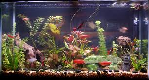 Home Freshwater Aquariums Picture | Things To Wear | Pinterest ... The Fish Tank Room Divider Tanks Pet 29 Gallon Aquarium Best Our Clients Aquariums Images On Pinterest Planted Ten Gallon Tank Freshwater Reef Tiger In My In Articles With Good Sharks For Home Tag Okeanos Aquascaping Custom Ponds Cuisine Small Design See Here Styfisher Best Unique Ideas Your Decoration Emejing Designs Of Homes Gallery Decorating Coral Reef Decorationsbuilt Wall Using Resonating Simplicity Madoverfish Water Arts Images