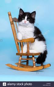 Norwegian Forest Cat. Kitten Sitting On A Small Rocking Chair ... 10 Best Rocking Chairs 2019 Building A Modern Plywood Chair From One Sheet White Baby Rabbit With Short Ears Sitting On Wood Armchairs Recliner Ikea Striped Upholstered Mahogany Framed Parts Of Hunker Uhuru Fniture Colctibles Sold Rocker 30 The Thing I Wish Knew Before Buying For Our Buy Living Room Online At Overstock Find More Inoutdoor Classic Wooden Like Hack Strandmon Diy Wingback Interiors