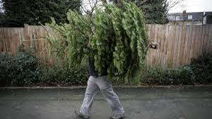 Ge 75 Ft Christmas Trees by Christmas Trees Will Cost You 1 000 In This New York City