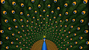 Peacock Feathers Backgrounds HD