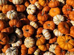 Best Pumpkin Patches Indianapolis by Fall Festivals Not To Be Missed