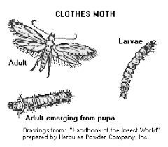 how to rid of clothes moths & live a better life