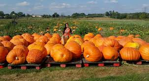 Michigan Pumpkin Patch Apple Orchard by Pumpkin Patches In Michigan Perfect For Fall Michigan