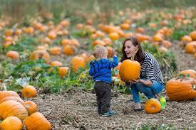 Pumpkin Picking Richmond greater vancouver pumpkin patches british columbia magazine