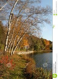 Sunnyside Pumpkin Patch Saratoga by Fall At Hidden Lake Gardens Royalty Free Stock Photo Image 7037815