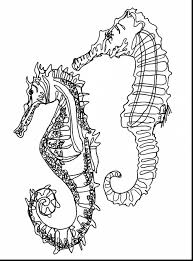 Magnificent Continuous Line Drawing Seahorse With Coloring Page And Free Printable Pages