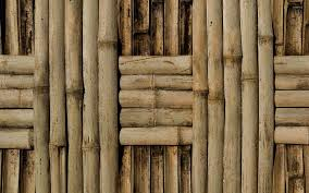 100 Bamboo Walls Download Wall Desktop And Mobile Wallpaper Wallippo