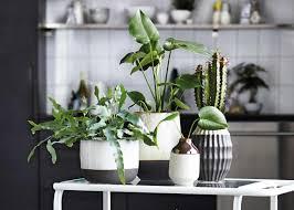 wenig licht pflanzen für dunkle räume schöner wohnen