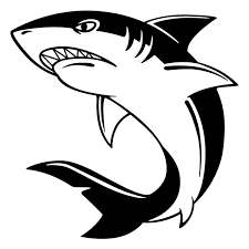 Shark Black And White Drawing Ourimgscom The Hippest