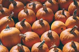 Canon City Pumpkin Patch by Pumpkin Pickin U0027 Barefoot Blonde By Amber Fillerup Clark