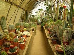 Garden Visit The Cactarium at Moorten Botanical Garden