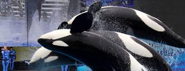SeaWorld® Discount Tickets - ARes Travel Best Pizza Coupons June 2019 Amazon Discount Code July Tips For Visiting Seaworld San Diego For Family Trips While Going To The Orlando Have Avis Promo Upgrade Azopt Card Mushybooks Payback Coupon Book App Online Codes Bath And Body Works Belk Seaworld Gold Coast Adventure Island Deals Can I Reuse K Cups Pelotoncycles Promo Codes 122