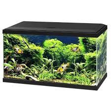 aquarium 60 litres achat vente aquarium 60 litres pas cher