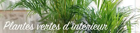 plantes vertes d interieur achat plantes vertes d intérieur s achètent dans la pépinière en