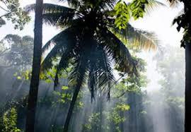 Rain Forest In The Dominican Republic