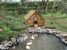 25+ Trending Duck Pond Ideas On Pinterest | Duck Coop, Duck ... Pond Makeover Feathers In The Woods Beautiful Backyard Landscape Ideas Completed With Small And Ponds Gone Wrong Episode 2 Part Youtube Diy Garden Interior Design Very Small Outside Water Features And Ponds For Fish Ese Zen Gardens Home 2017 Koi Duck House Exterior And Interior How To Make A Use Duck Pond Fodder Ftilizer Ducks Geese Build Nodig Under 70 Hawk Hill Waterfalls Call Free Estimate Of Duckingham Palace Is Hitable In Disarray Top Fish A Big Care