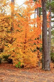 Pumpkin Patch Near Birmingham Alabama by 323 Best Autumn In Alabama Images On Pinterest Alabama Sweet