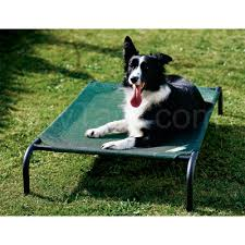 coolaroo dog bed replacement cover large green