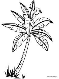 Palm Tree Coloring Pages 1