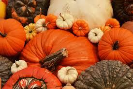 Pumpkin Festival Circleville Ohio 2 by The Pumpkin Show Meghan Sours