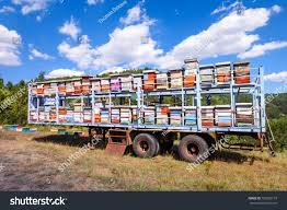 Bees Flying Around Truck Loaded Colorful Stock Photo (Edit Now ... Arnia Hive Monitors On Twitter Apimondia2017 Tech Tour Bee Lorry Bee Busters Truck Moving Bees Is Not Easy Slide Ridge Notes Video Driver Cited In Truck Crash 6abccom Brown Cat Bakery Transport Meet The Biobee Youtube Why Are So Many Trucks Tipping Over The Awl 14 Million Spilled I5 Everybodys Been Stung Honeybees Travel 1000 Miles To Pollinate Nations Crops Bbj Today 2018 Hino 817 4x4 Flat Deck
