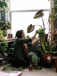 ab ins grüne schlafzimmer pflanzen zimmerpflanzen schöne