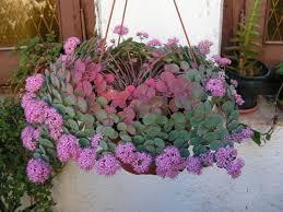 entretien plante grasse d interieur succulente plante entretien finest comment entretenir une plante