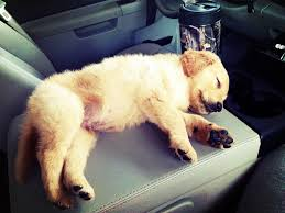 Golden Retriever Puppy Sleeping On The Center Console Of Daddy's ... Best Body Shop Mexico Collision Center Lowrider Magazine This Is The Tesla Semi Truck The Verge Truck Land Office For Sale Offispacecom Centre Du Camion Rb Truckers Handbook And Saving Food Nirvana That Civic Eats Returns May 2 Gms Classic Show Marines Sailors Rticipate In Grubstake Days Parade Marine White Celebrated Local Culture Seahawks Fun 6500 New Pickup Trucks Are Sold Every Day America Drive Last Four Missing Soldiers Found Dead After Fort Hood Accident Used Ford Dealer At Sheehy Of Warrenton