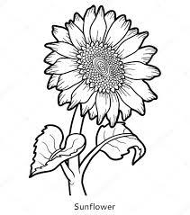 Livre De Coloriage Fleur De Tournesol Image Vectorielle