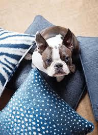 Crypton Super Fabric Sofa by 100 Crypton Super Fabric Sofa Tips For A Pet Friendly Home