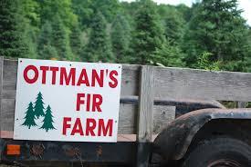 Canaan Fir Christmas Tree Needle Retention by Ottman U0027s Fir Farm