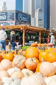 Pumpkin Patches Near Dallas Tx 2015 by Dallas Pumpkin Patch Oh What A Sight To See